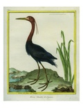 Great Blue Heron Giclee Print by Georges-Louis Buffon