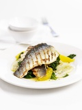 Grilled Sea Bass on Spinach with Oranges Photographic Print by Ian Garlick