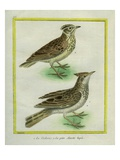 Crested Lark and Lesser Short-Toed Lark Reproduction procédé giclée par Georges-Louis Buffon