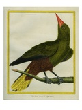 Green Oropendola Giclee Print by Georges-Louis Buffon