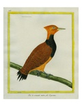 Ringed Woodpecker Giclee Print by Georges-Louis Buffon