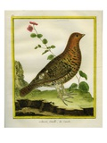 Female Ruffed Grouse Giclee Print by Georges-Louis Buffon