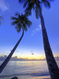 Caribbean, Barbados, Mullins Beach Photographic Print by Michele Falzone