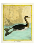 Little Grebe Giclee Print by Georges-Louis Buffon