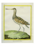 Swinhoe's Snipe Reproduction procédé giclée par Georges-Louis Buffon