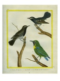 Male and Female Black-Throated Antbird and Le Verdin De La Cochinchine Giclee Print by Georges-Louis Buffon