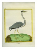 Grey Heron Giclee Print by Georges-Louis Buffon