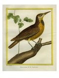 Common Starling Giclee Print by Georges-Louis Buffon