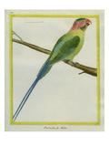 Long-Tailed Parakeet Reproduction procédé giclée par Georges-Louis Buffon
