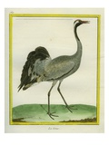 Crane Giclee Print by Georges-Louis Buffon