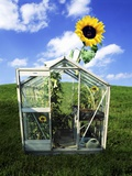 A Sunflower Growing Out of a Greenhouse Photographic Print by Jolanda Cats