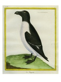 Razorbill Giclee Print by Georges-Louis Buffon