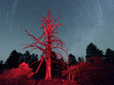 Dead Tree and Nights Sky at Sunset Crater National Monument, Arizona, USA Photographic Print by Christian Heeb