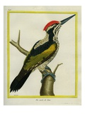 Green Goa Woodpecker Giclee Print by Georges-Louis Buffon