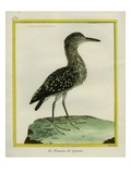 Forest Bittern Giclee Print by Georges-Louis Buffon