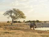 Elephant at Waterhole, Etosha National Parrk, Namibia, Africa Photographic Print by Christian Heeb