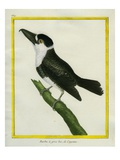 Prong-Billed Barbet Giclee Print by Georges-Louis Buffon