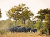 Africa, Namibia, Caprivi, Herd of Elephants in the Bwa Bwata National Park Photographic Print by Christian Heeb
