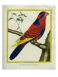 Moluccan King Parrot Giclee Print by Georges-Louis Buffon