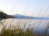 Mount Thielson, Fireweed, Epilobium Angustifolium, Diamond Lake, Douglas County, Oregon, USA Photographic Print by Christian Heeb