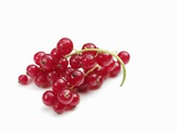 Redcurrants Photographic Print by Silvia Baghi