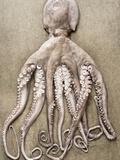 An Entire Octopus Fotoprint van Sarka Babicka