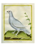 White Grouse Giclee Print by Georges-Louis Buffon