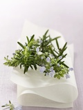 Rosemary with Flowers on White Cloth Photographic Print