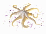 An Octopus and Lilac Flowers Fotoprint van Silvia Baghi