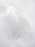 A White Feather Photographic Print by Barbara Lutterbeck