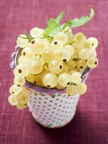 White Currants in Beaker Photographic Print