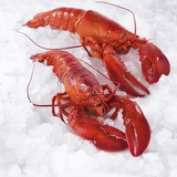 Two Cooked Lobsters on Ice Photographic Print by J&#252;rgen Holz