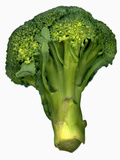 A Head of Broccoli Photographic Print by Steven Morris