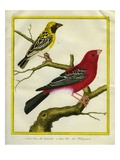 Pine Grosbeak and Evening Grosbeak Giclee Print by Georges-Louis Buffon