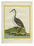 Great Crested Grebe Impression giclée par Georges-Louis Buffon