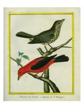 Western Tanager and Flame-Rrumped Tanager Giclee Print by Georges-Louis Buffon