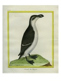 Female Razorbill Reproduction proc&#233;d&#233; gicl&#233;e par Georges-Louis Buffon