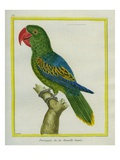 Eclectus Parrot Stampa giclée di Georges-Louis Buffon