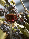 A Glass of Red Wine with Grapes in the Background Photographic Print by Karl Newedel