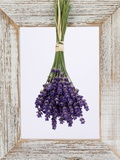 Lavender Hanging Up to Dry Photographic Print by Ottmar Diez