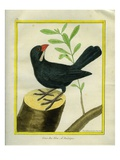 Blue Grosbeak Giclee Print by Georges-Louis Buffon