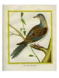 Canadian Turtle Dove Giclee Print by Georges-Louis Buffon