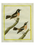 Wheatear and Whinchat Reproduction procédé giclée par Georges-Louis Buffon