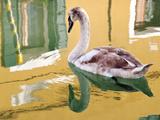 Swan, Burano, Veneto Region, Italy Photographic Print by Nadia Isakova