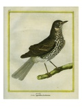 Fieldfare Giclee Print by Georges-Louis Buffon