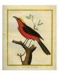 Yellow-Crowned Gonolek Reproduction procédé giclée par Georges-Louis Buffon