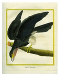 L'Aigle D'Amérique Giclee Print by Georges-Louis Buffon