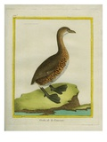 Pied-Billed Grebe Impression giclée par Georges-Louis Buffon