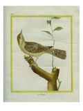 Eurasian Wryneck Giclee Print by Georges-Louis Buffon