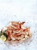 Cooked Prawns in a Bowl on Crushed Ice Photographic Print
